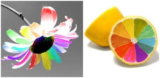 test couleur : fleurs et citron en multiples couleurs