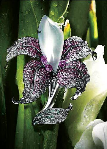 broche d'Aster Ma forme orchidée chinoise